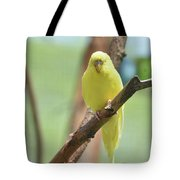 Gorgeous Little Yellow Parakeet Living In The Wild Tote Bag