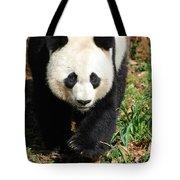 Gorgeous Sweet Giant Panda Bear Ambling Along Tote Bag