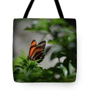 Gorgeous View Of An Oak Tiger Butterfly In The Spring Tote Bag
