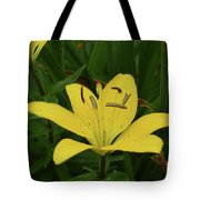 Gorgeous Yellow Lily Growing In Nature Up Close Tote Bag