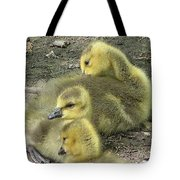 Gosling Trio Tote Bag