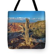 Grand Canyon Old Tree Tote Bag