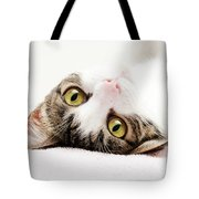 Grand Kitty Cuteness Tote Bag by Andee Design