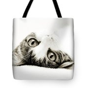 Grand Kitty Cuteness Bw Tote Bag by Andee Design