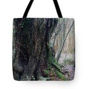 Grandfather Tree. Tote Bag