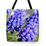 Grape Hyacinth Closeup Tote Bag