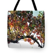 Grape Vine In Autumn Tote Bag