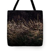 Grass At Sunset Tote Bag