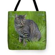 Gray Cat In Vivid Green Grass Tote Bag