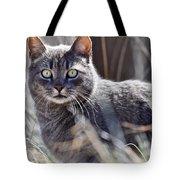 Gray Cat In Woods Tote Bag