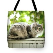 Gray Cat Sitting On A Balcony Tote Bag