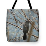 Gray Catbird Tote Bag