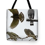 Gray Hawk Collage Tote Bag