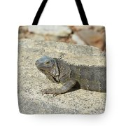 Gray Iguana Sunning And Resting On A Large Rock Tote Bag