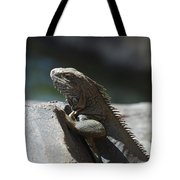 Gray Iguana With Spines Along His Back On A Rock Tote Bag