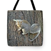 Gray Squirrel - Sciurus Carolinensis Tote Bag