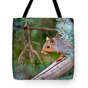 Gray Squirrel Pictures 93 Tote Bag