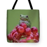 Gray Tree Frog Tote Bag