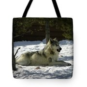 Gray Wolf 6 Tote Bag