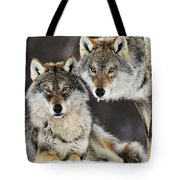 Gray Wolf Canis Lupus Pair In The Snow Tote Bag
