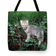 gray Wolf Pup in Woods Tote Bag