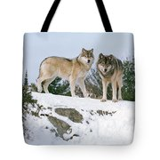Gray Wolves Canis Lupus In A Forest Tote Bag