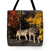 Gray Wolves In Autumn Tote Bag