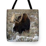 Grazing Bull Moose Tote Bag