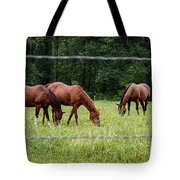 Grazing Horses - Cades Cove - Great Smoky Mountains Tennessee Tote Bag