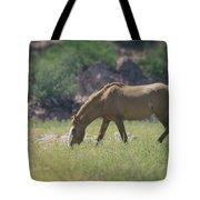 Grazing Wild Mustang  Tote Bag