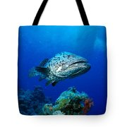 Great Barrier Reef Tote Bag by Peter Stone - Printscapes