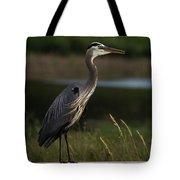 Great Blue Heron 1 Tote Bag
