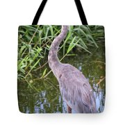 Great Blue Heron Closeup Tote Bag