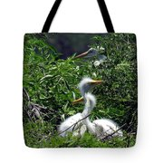Great Egret Chicks 2 Tote Bag