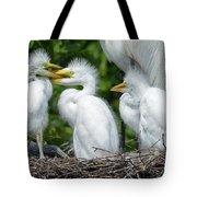 Great Egret Chicks Tote Bag