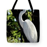 Great Egret Up Close Tote Bag
