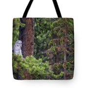 Great Gray Owl Perched Tote Bag