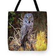Great Grey Owl Portrait Tote Bag