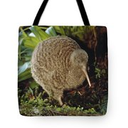 Great Spotted Kiwi Apteryx Haastii Male Tote Bag by Tui De Roy