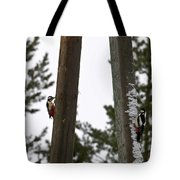 Great Spotted Woodpeckers Tote Bag