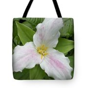 Great White Trillium Tote Bag