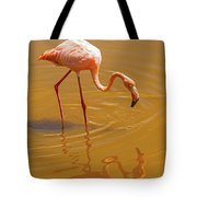 Greater Flamingo In The Water At Galapagos Islands Tote Bag