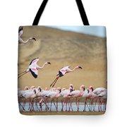 Greater Flamingos Phoenicopterus Tote Bag