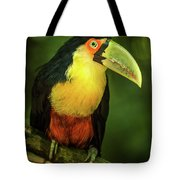 Green-billed Toucan Perched On Branch In Jungle Tote Bag
