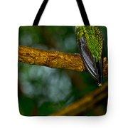 Green-crowned Brilliant Hummingbird Tote Bag