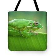 Green Frog Whitelips Tote Bag