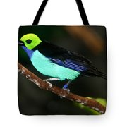 Green Headed Bird On Branch Tote Bag