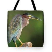 Green Heron Butorides Virescens Tote Bag