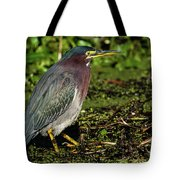 Green Heron In Swampy Water Tote Bag