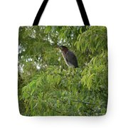 Green Heron In Tree Tote Bag